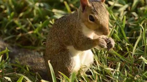 squirrel eating bird food youtube