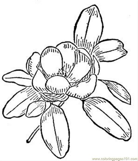 coloring pages of magnolia flowers pin fashion mannequin colouring pages on