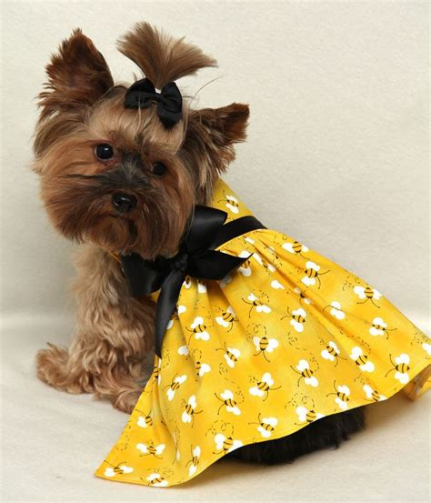 teacup yorkie clothing best 25 teacup yorkie ideas on yorkie teacup puppies yorkie clothes and