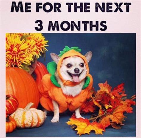 Fall Meme - 22 funny pumpkin spice memes smosh
