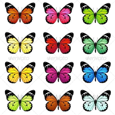 printable images butterflies set of colorful vector butterflies butterfly template