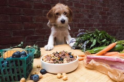 corso di cucina on line corso di cucina per cani