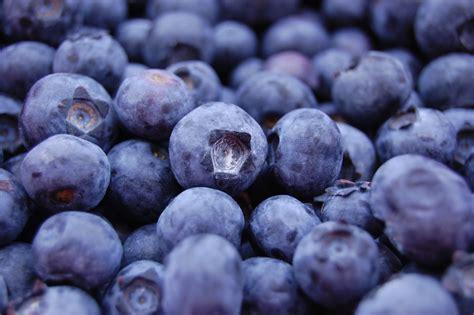 blueberry wallpaper blueberry hd desktop wallpapers