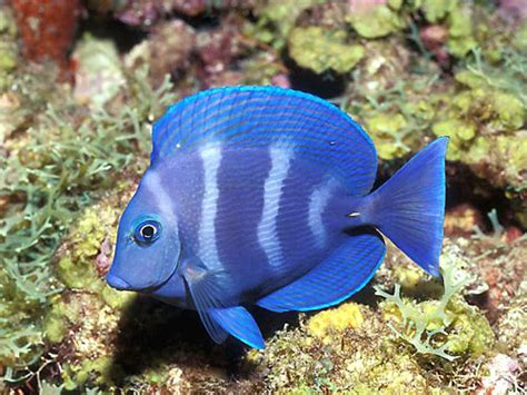 World Visits: Tropical Fish Wonderful Natural Color Design