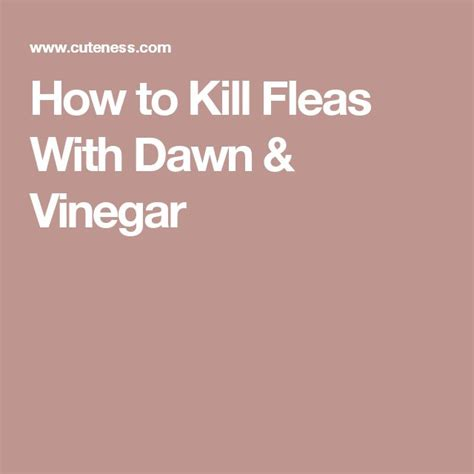 how to kill dog fleas in the house how to kill fleas in your house 28 images how do you