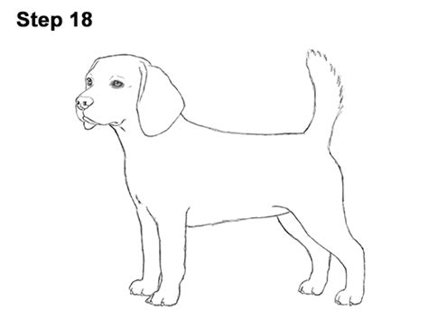 would you step on a puppy for 18 billion how to draw a beagle