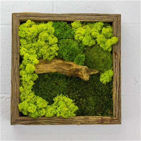 green moss frame water free green wall from flowerboxusa on