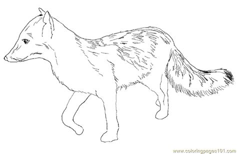 coloring page gray fox gray fox coloring page free fox coloring pages