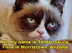 Tardar Sauce Meme - tardar sauce isn t grumpy album on imgur