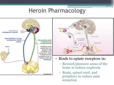How To Speed Opiate Detox At Home by Drugs Of Abuse For Nonscience Majors