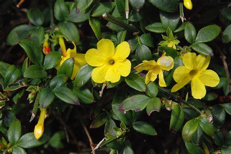 Es Un Gnero Con Alrededor De 110 Especies De La Familia De Las | 10 tipos de flores imagenes im 225 genes taringa