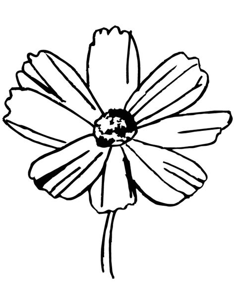 cosmos flower coloring page yellow cosmos flower coloring page download free yellow