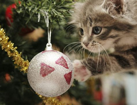 pet friendly christmas tree alternatives tree alternatives