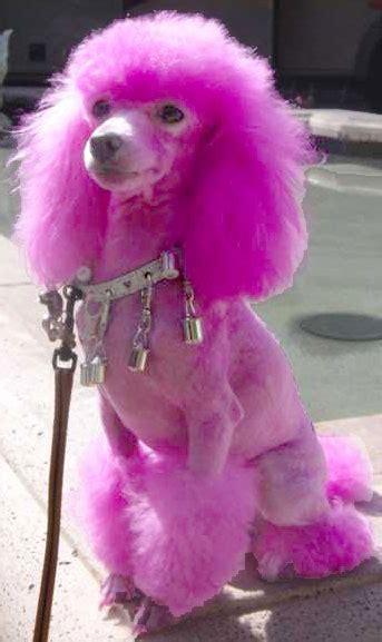 pink dogs pebbels