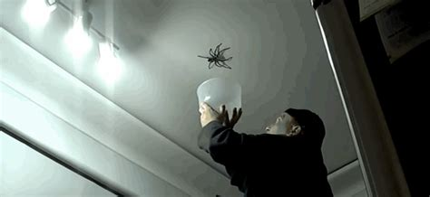 youre scared  spiders  give australia