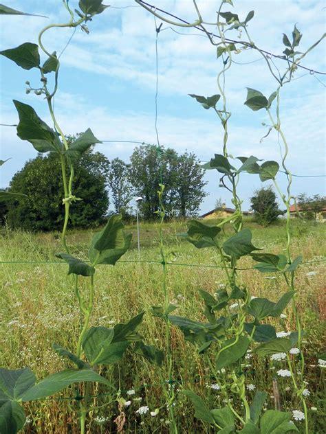 rete per fiori rete per pomodori fagiolini e piante ricanti tenax
