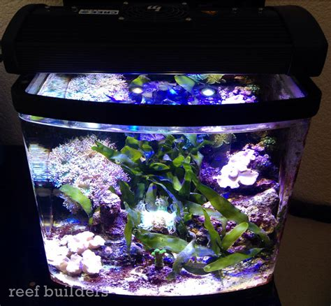 Lu Aquarium Model Jepit on with illumagic blaze led reef builders the reef and marine aquarium
