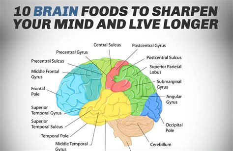 diet for the mind the science on what to eat to prevent alzheimer s and cognitive decline books 10 brain foods to sharpen your mind and live longer