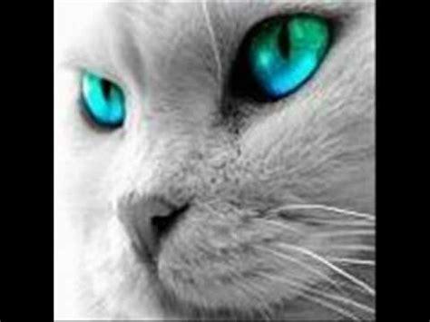 imagenes de ojos verdes de gatos el gato de ojos verdes reggae rap en espa 241 ol youtube