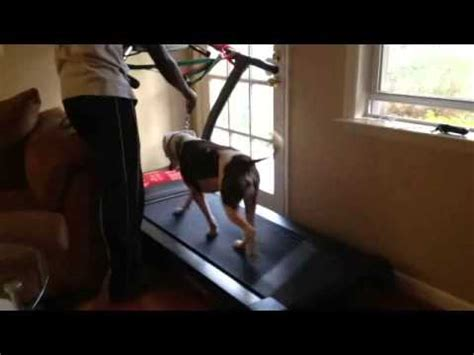 how to your to run on a treadmill pit bull manual treadmill doovi