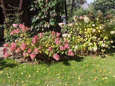 Garten Gestalten Hortensien by Garten Gestalten Mit Rispenhortensie Hydrangea Paniculata
