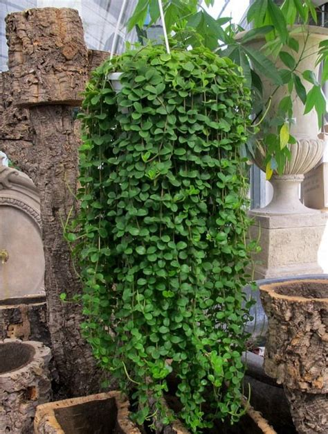 best small hanging plants 25 best ideas about hanging plants outdoor on pinterest