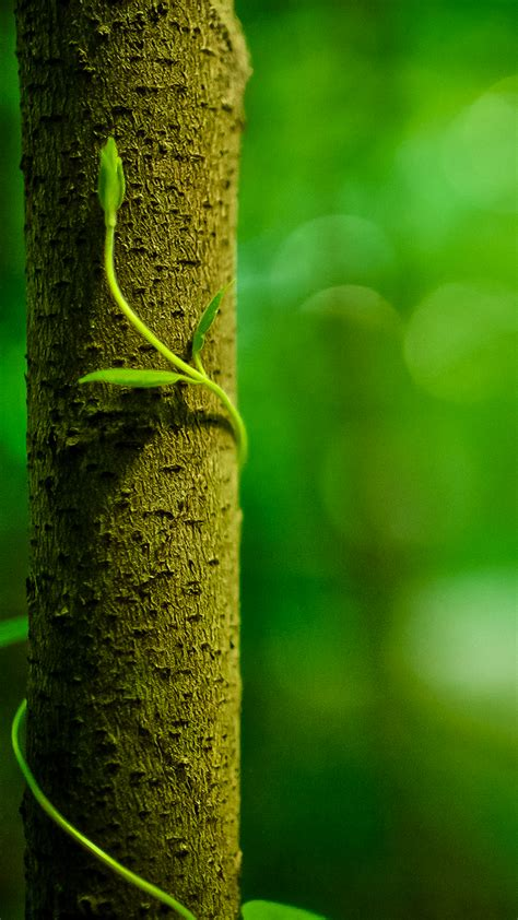 green vine wallpaper green vine with tree trunk iphone hd wallpapers download