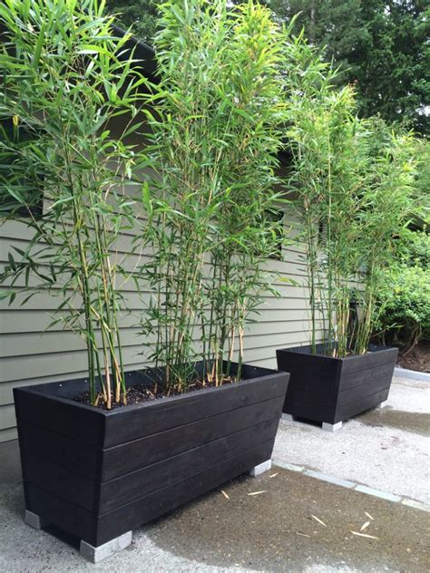 useful tips for growing bamboo plants in pots page 2 of 2