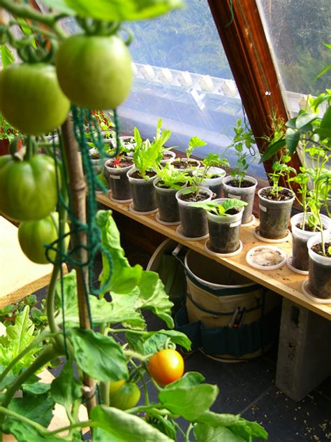 3 ways how to start indoor vegetable garden for beginners