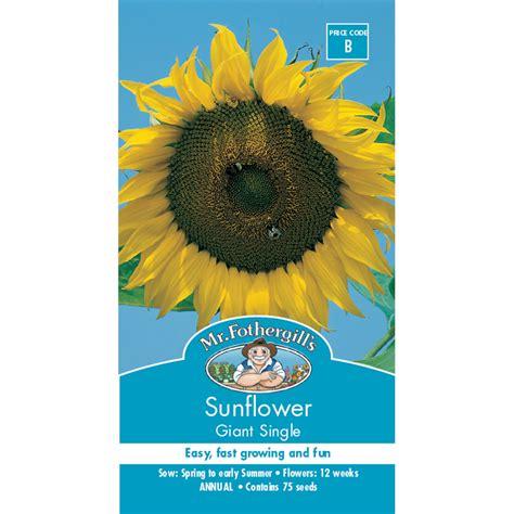 Min 25 Biji Benih Bunga In A Mist jual bibit biji benih sunflower single