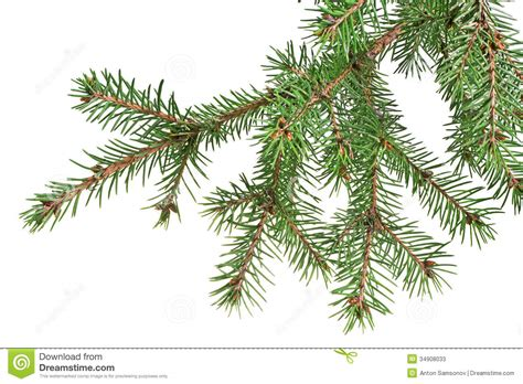 christmas tree branch stock photos image 34908033