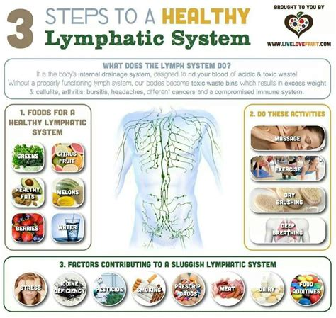 Healthy Detox Remedies by Lymphatic System Healthy For Me