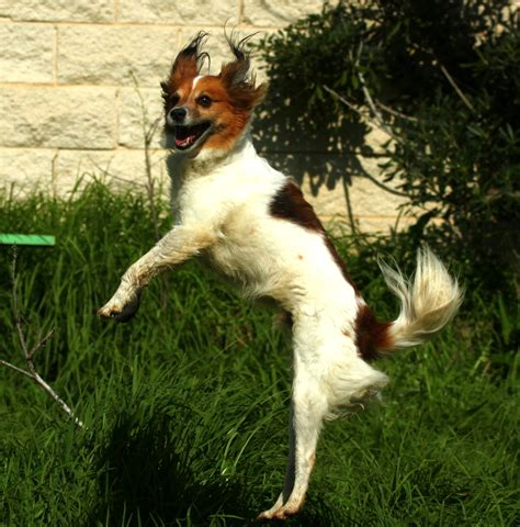 jumping puppy jumping images