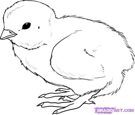 chicken drawing outline at getdrawings com free for personal use free chicken drawing how to draw a chick step by step