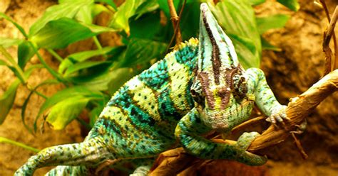 animals that change color top 10 animal that can change color everything you