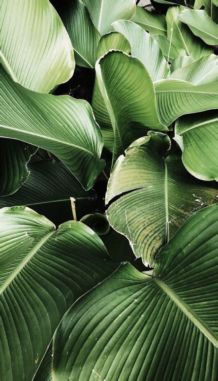 banana palm wallpaper tumblr palm leaves tumblr