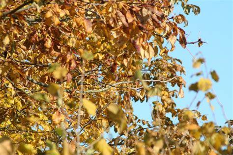 Garten Pflanzen Jahreszeit by Der Garten Im Herbst So Nutzt Die Tr 252 Be Jahreszeit