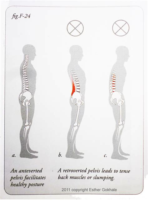 8 steps to a pain free back natural posture solutions for pain 8 steps to a pain free back an interview with esther