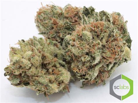 black strain black label kush marijuana strain review 23 thc 0 cbd ibudtender