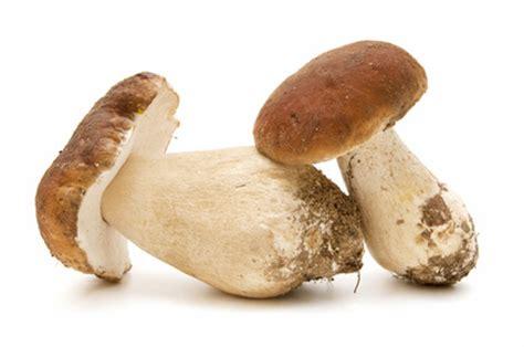 coltivazione funghi porcini vaso receta risotto ai funghi porcini a tavola con il conte
