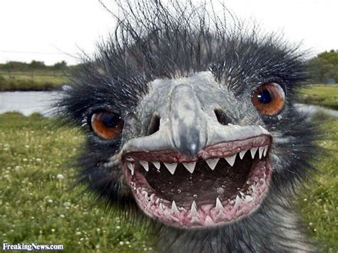 funny emu pictures freaking news