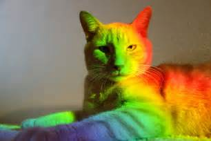 colorful cats colorful fever images colorful cat 2 hd wallpaper and