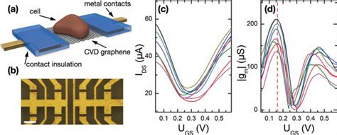 transistor back gate effect eavesdropping on cells with graphene transistors