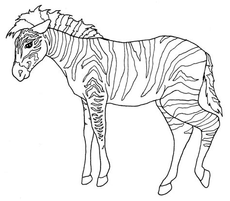 zoo coloring pages for adults 1000 images about adult coloring pages on pinterest