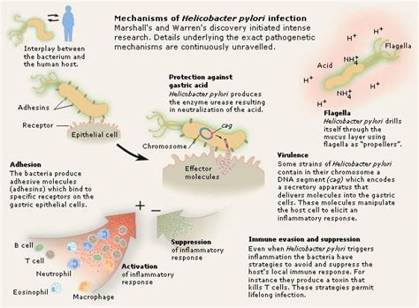 Nobel Prize In Physiology Or Medicine Also Search For Pin By A B On Health Yeast Fungus
