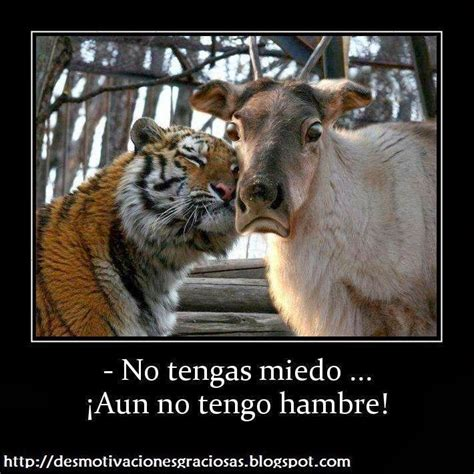 imagenes chistosos con frases chistosas frases graciosas picantes frases