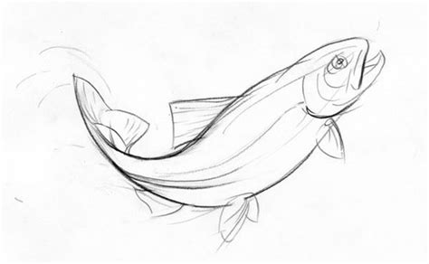 drawing of a jumping trout by artyom yefimov via behance