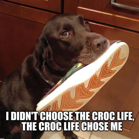 Chocolate Lab Meme - croc life imgflip