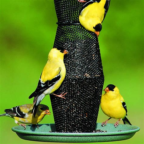amazon com no no green and black finch feeder gb5f00340