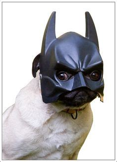 bat pug pugs in vogue on 88 pins